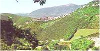 Boschi di Cerro