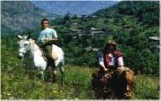 Passeggiate a cavallo sul Monte Subasio